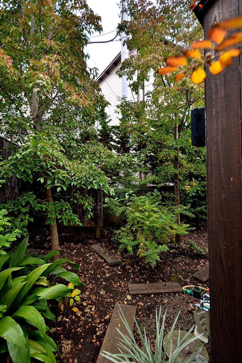 Black soil and hexagon garden thinkroots for Black garden soil