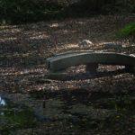 参考資料 諫早神社 江戸池泉の復活 橋