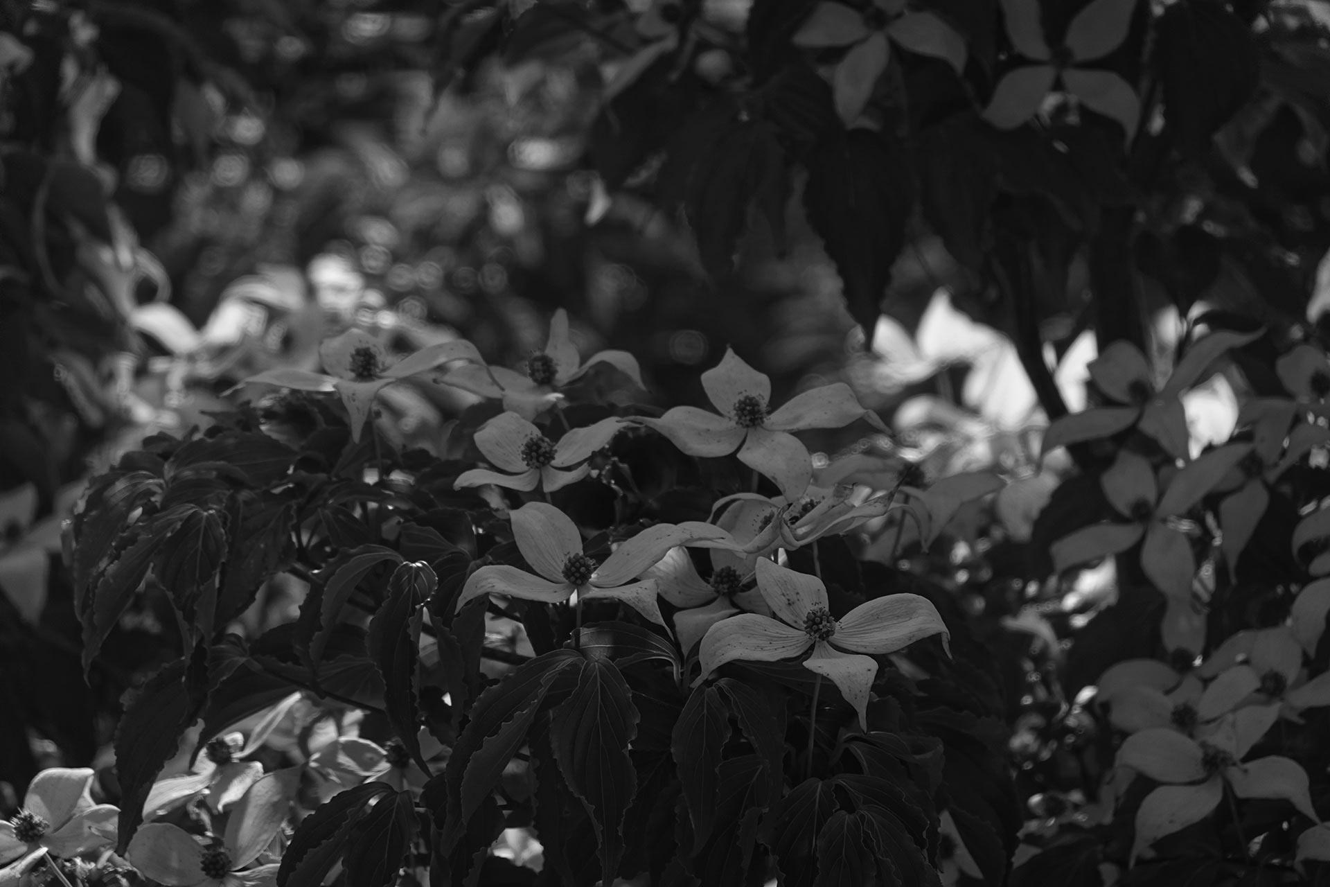 ©N-tree